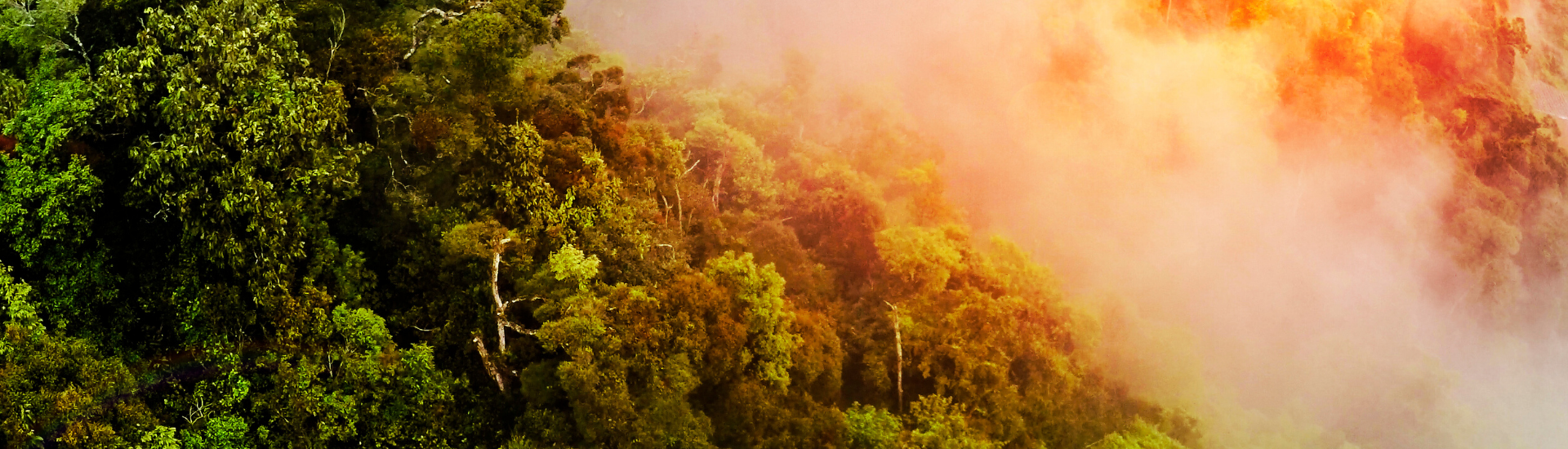 As deforestation escalates in the Amazon, Ceres releases major new investor framework to drive urgent corporate action